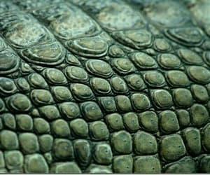 green and crocodile skin image