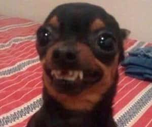 dog, hahahaha, and funny image