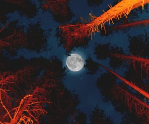 forest, full moon, and nature photography image