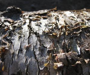 texture, tree, and bark image