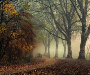 Path, moody morning..... by herman-van-den-berge