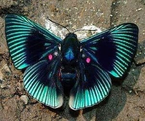 farbe butterfly image