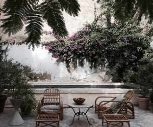 garden, plants, and flowers image