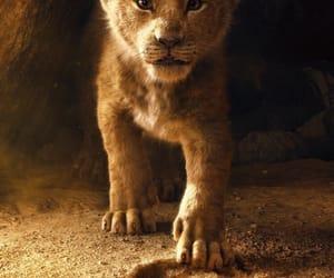 animals, baby lion, and disney image