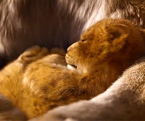 baby lion, disney, and gif image