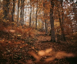 autumn, fall, and fall vibes image