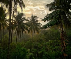 nature, jungle, and tropical image