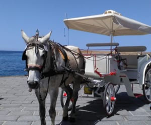 carriage, crete, and Greece image