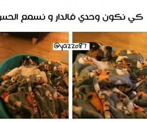 arabic, dz funny, and dz image