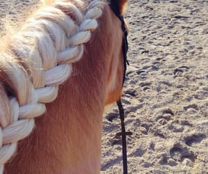 beautiful, horse, and zarif image