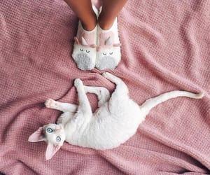 cat and cute cat image