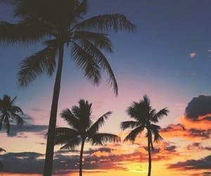 beautiful, palms, and sky image