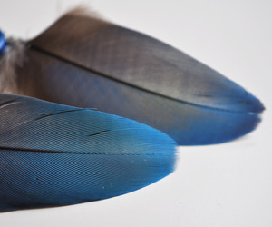 feather, parrot, and stone paper feather image