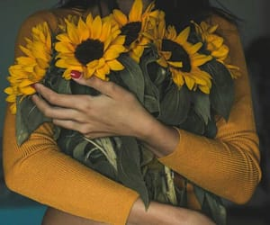 sunflower, fall, and yellow image