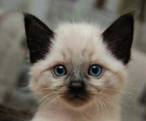 cat, kitten, and kitty image