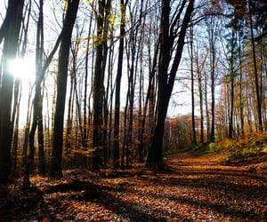 autumn, colors, and forest image