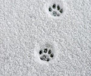 snow, animal, and winter image