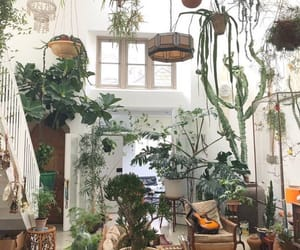 plants and house image