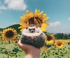 animals, sunflower, and hedgehog image
