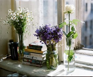 flowers, book, and window image