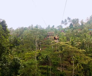 bali, boho, and forest image