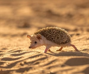 animal, nature, and hedgehog image