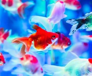 aquarium and goldfish image