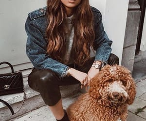 autumn, dog, and boots image