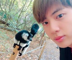 animal, kpop, and zoo image