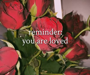 red, reminder, and roses image