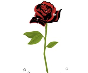 amo, follow, and romantic image