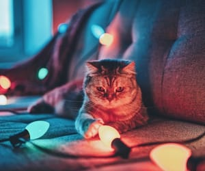 cat, light, and photography image