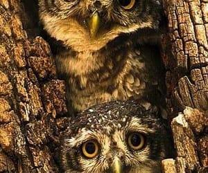 bird, nature, and owl image