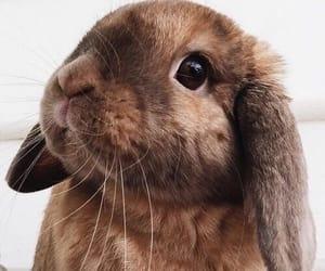 animal, cute, and animals image