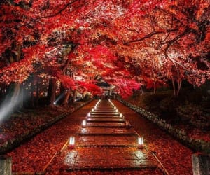japan, red, and tree image