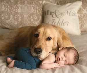 dog, baby, and outfit image