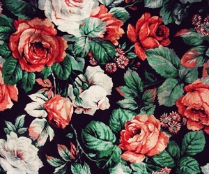 flowers, floral, and rose image