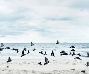 bird, beach, and blue image