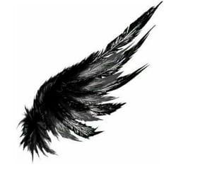 angel white pluma image