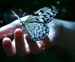 aesthetic, butterfly, and light blue image