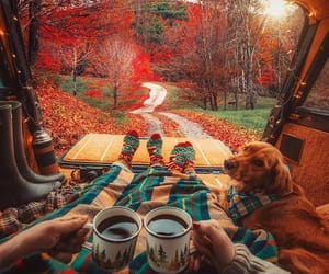 autumn, dog, and coffee image