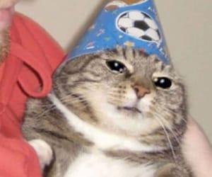 cat, meme, and mood image