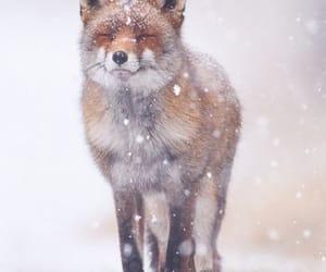 beautiful, nature, and winter image