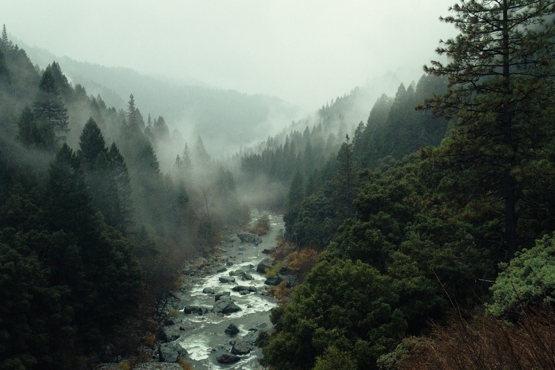 river, fog, and forest image
