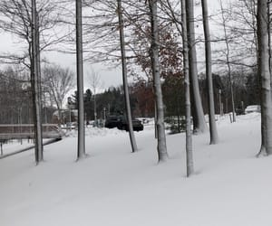 cold, college, and nature image
