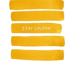 quotes, gold, and golden image