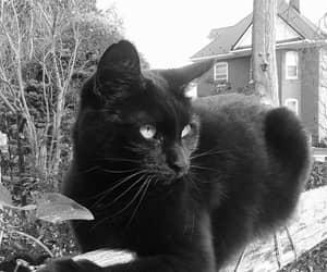 animal, cat, and pet image