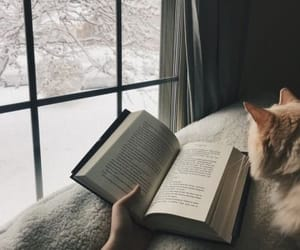 book, cat, and winter image