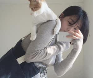 alternative, animals, and cat image