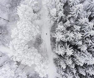 aerial photography, aerial view, and forest image